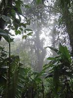 Costa Rica regenwoud foto