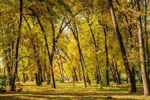 mooie herfst