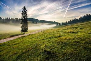 dennenboom in de mist door de weg in de buurt van bergen foto
