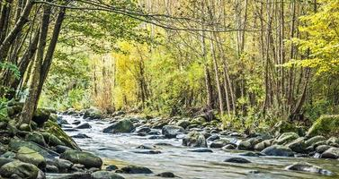 bergbeek in de herfst foto