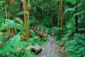 brug en pad in het tropisch regenwoud in san juan foto