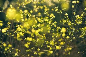 het is lente foto