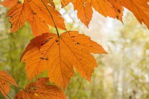 herfstbladeren foto