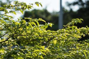 groene bladeren op aardachtergrond foto