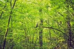 vintage foto van abstracte achtergrond van groene boomtakken