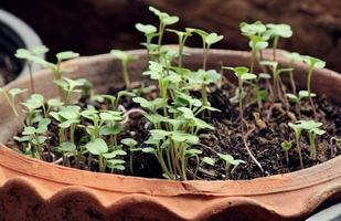 close-up van jonge boompjes in potten. foto