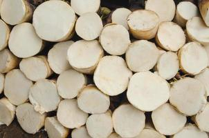 bamboe-scheut foto