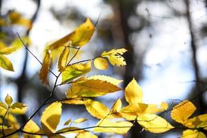 details van gele herfstbladeren, bokeh licht