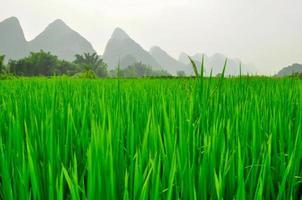 guilin li rivier karst berglandschap in yangshuo foto