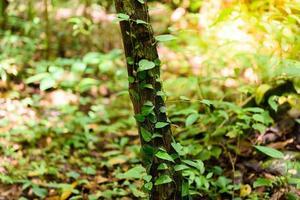 groene mos op de boom foto