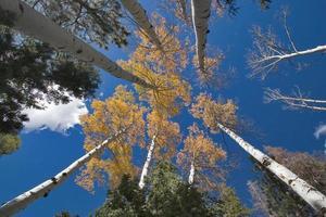 bomen en wolken. foto