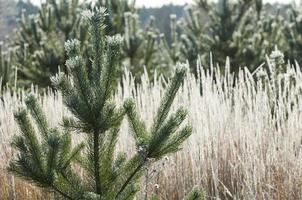 herfstvorst op het gras en de bomen foto