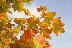 oranje herfstbladeren op blauwe hemelachtergrond foto