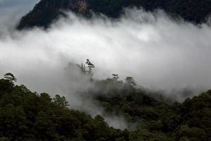 landschapsmening van regenwoud in mist bij ochtend op berg foto