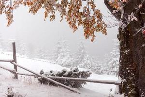 twee seizoenen - winter- en herfsttafereel in het park