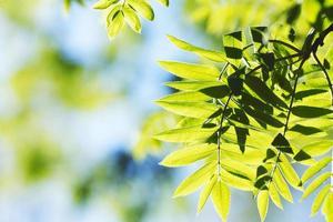 groene bladeren achtergrond foto