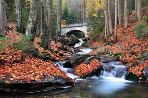 herfst kreek foto