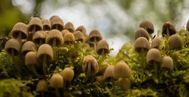 wilde paddenstoelen foto
