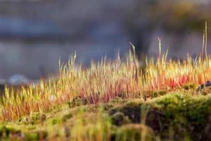 close-up van een kleurrijk mos met sporen.