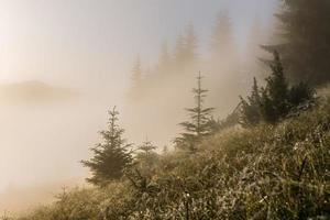 het gras op de hellingen bedekt met dauw en mist