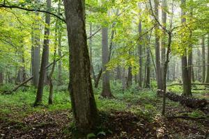 oude natuurlijke bladverliezende stand in de ochtend foto