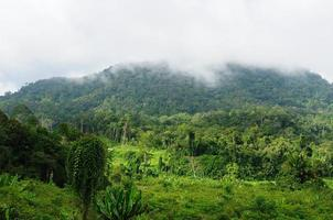 indonesië - tropische jungle aan de rivier, borneo foto