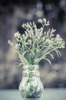 grasbloemen in glazen flessenvaas, selectieve aandacht foto