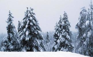 besneeuwde kersttafereel foto