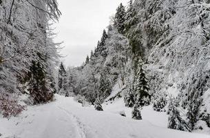 besneeuwde bomen in de bergen.
