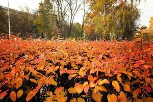 textuur van herfstbladeren foto