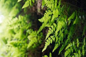 groene varen foto