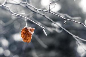 eenzaam blad foto