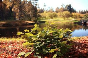 herfstlandschap in het stadspark