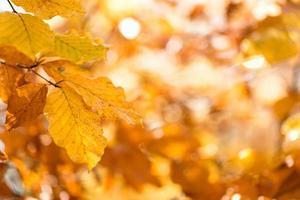 herfst, bladeren achtergrond.