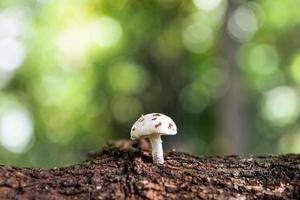 kleine wereld 5 foto