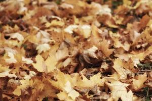gevallen gele bladeren textuur foto