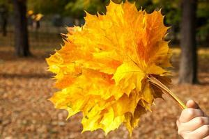 gele esdoornbladeren, herfstpark, gouden herfsttijd, de gele