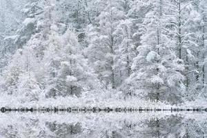 sneeuw stroomden tamaracks foto