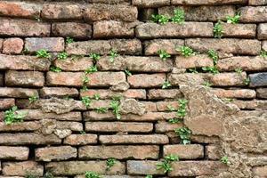 oude bakstenen muur gegroeid met gras foto