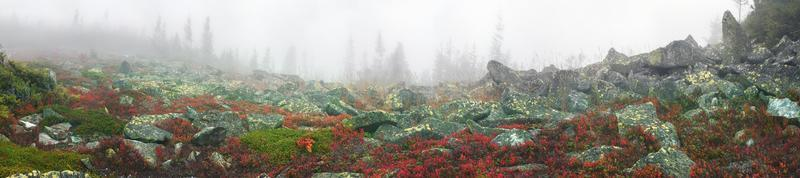 mistige herfst