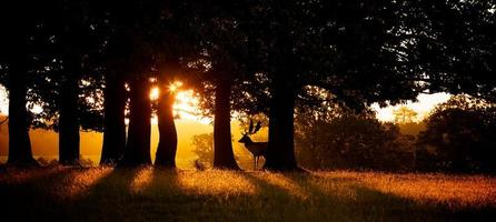 zonsopgang silhouet foto