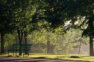 mist in het park foto