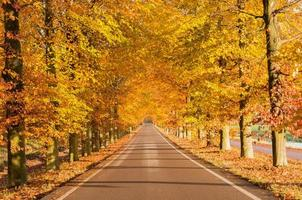 herfst in nederland foto
