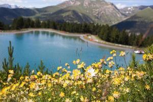 berg bloemen
