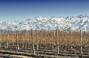 wijngaard en berg foto