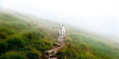 hond in de mist foto