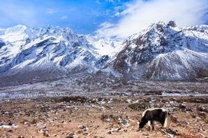 latang national park, nepal foto