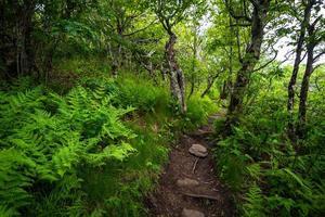 Appalachian Trail foto