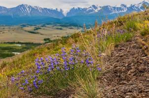 bergen blauwe bloemen stenen foto