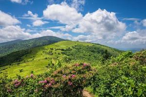 zomer roan berg bloei foto